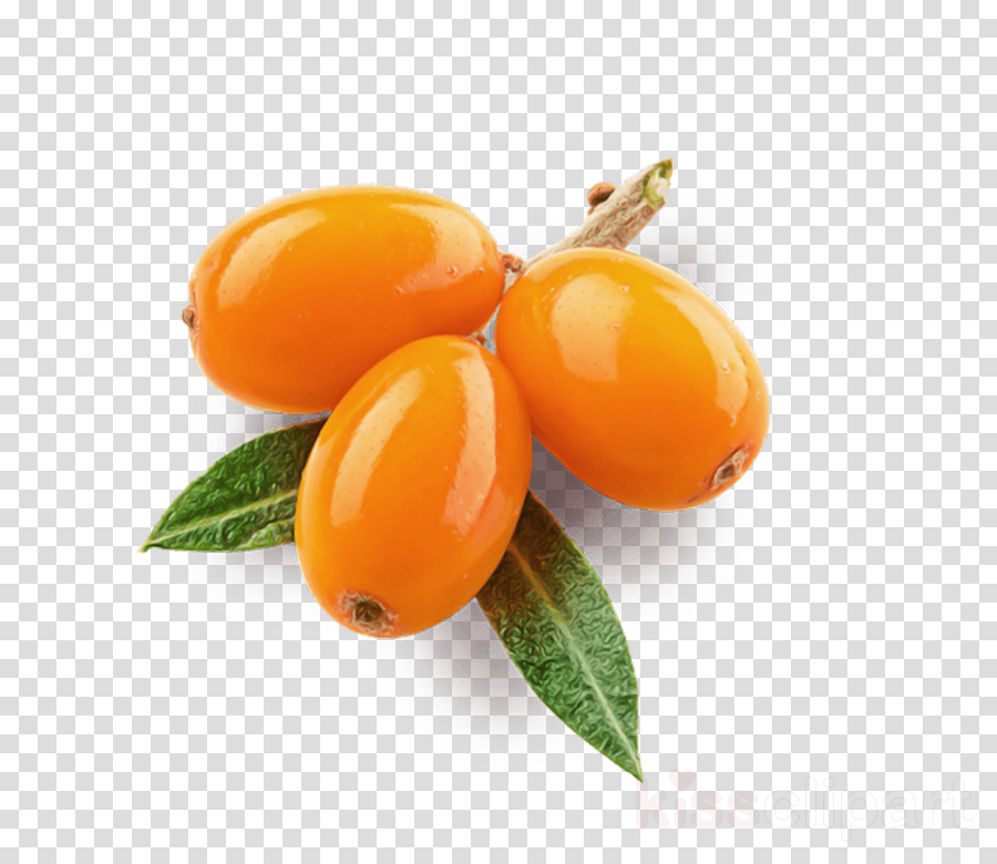 fruit food plant hippophae kumquat clipart.