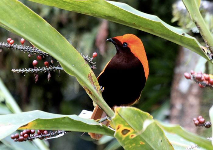 Papua New Guinea: Paradise Untamed.