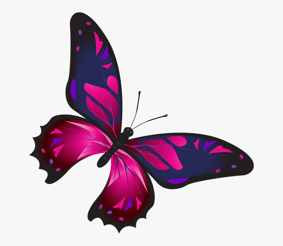 Rainbow Butterfly Clipart Png Format.