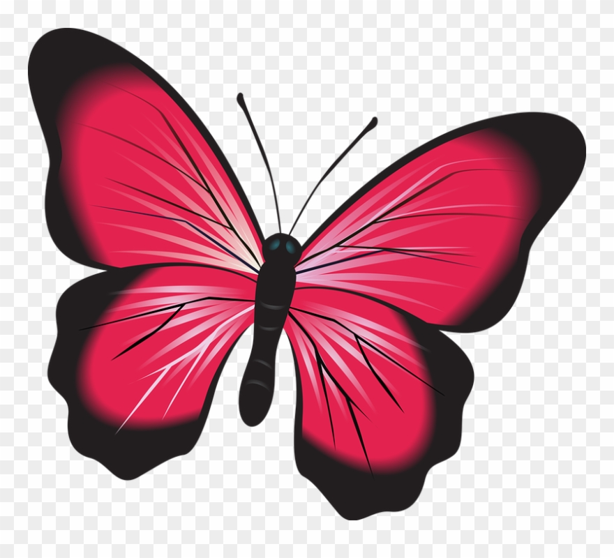Butterfly, Pink, Clip Art, Insect, Nature, Natural,.