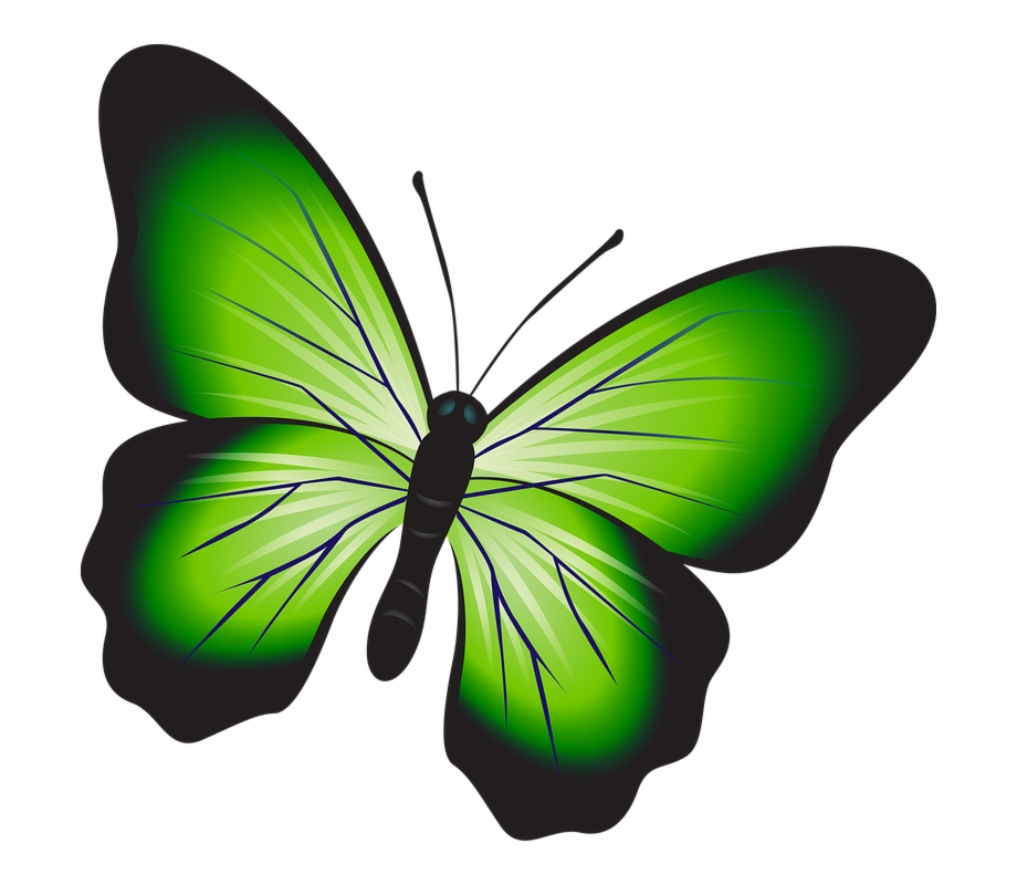 Butterfly Colorful Green Insect Decoration Decor.