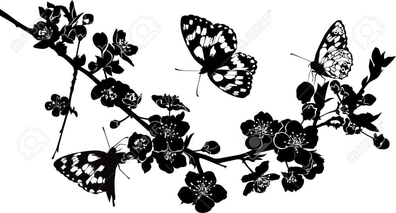 Kvist Körsbär Blommar Och Fjärilar Royalty.