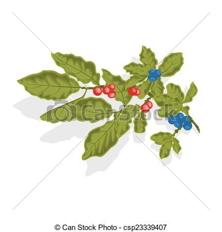 Vektor Clipart av Blåbär, kvist, med, bladen, och, Bär, vektor.