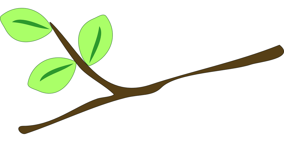 Gratis vektorgrafik: Gren, Blade, Kvist, Plante, Vokse.