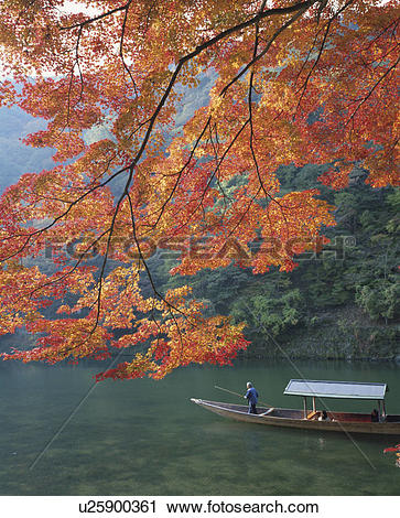 Stock Photography of Arashiyama Ooi river and Japanese maple in.