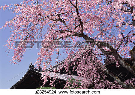 Stock Photo of Chion.
