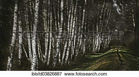"Picture of ""Birch copse at a flood protection embankment along the."