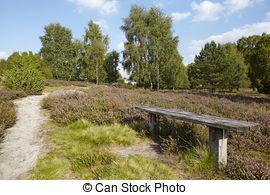 Picture of Luneburg Heath.