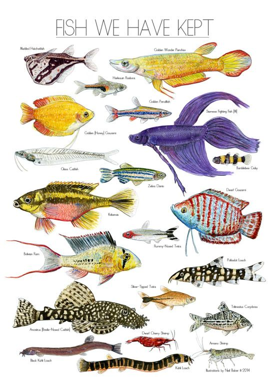 1000+ images about Fish on Pinterest.