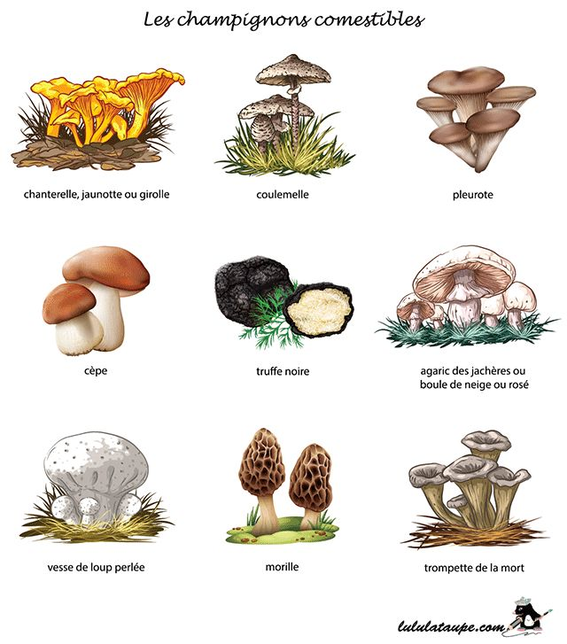 1000+ ideas about Champignon Comestible on Pinterest.