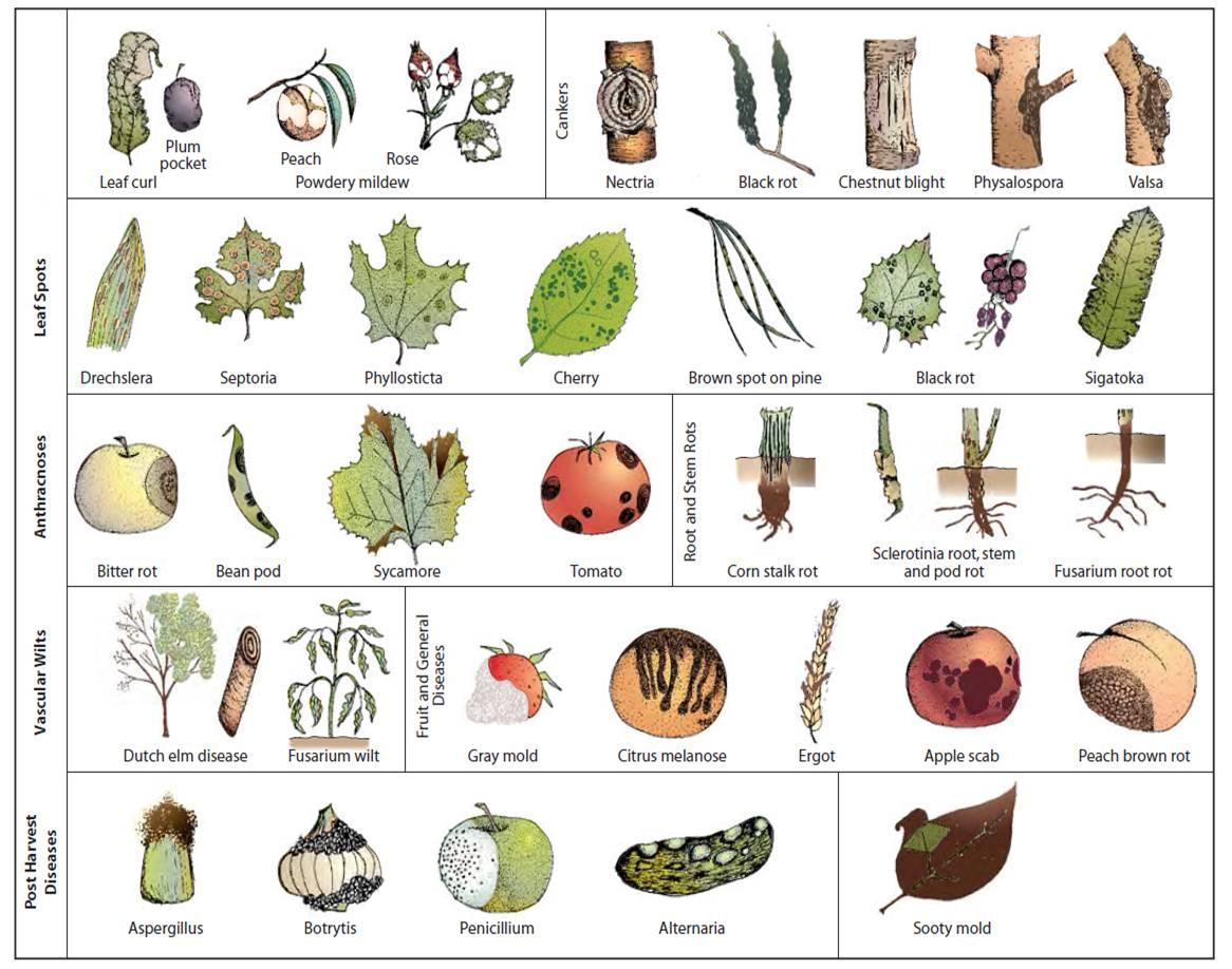 Kingdom Fungi and PhytoPathology.