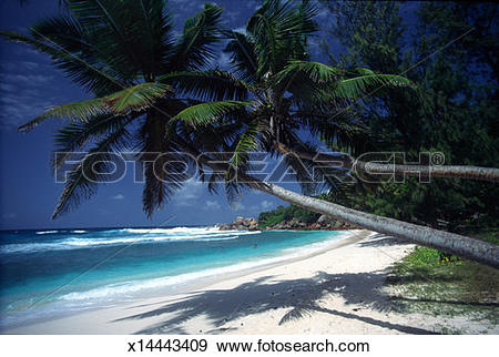 Stock Photograph of Seychelles, La Digue Island, Anse Cocos, palm.