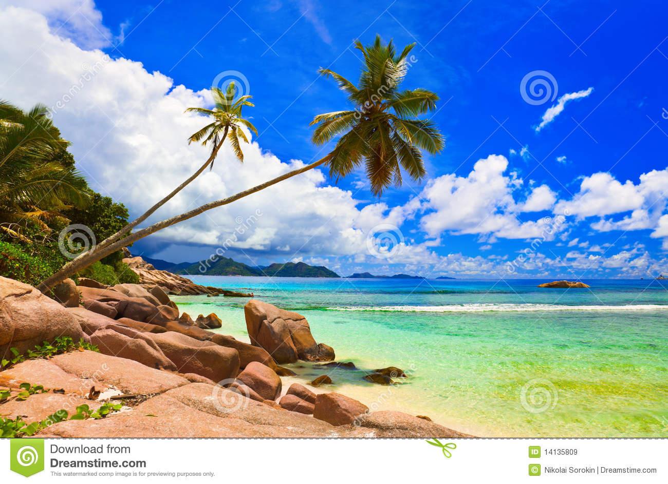 Palms On Beach At Island La Digue, Seychelles Royalty Free Stock.