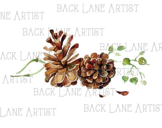 Pigna disegno ad acquerello Clipart Lineart di BackLaneArtist.