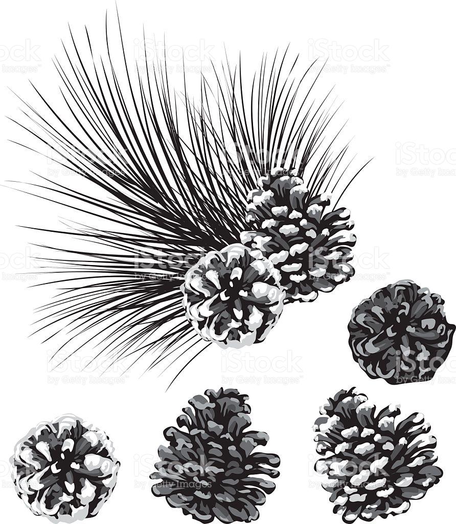 Bianco E Nero Pigna Clipart Illustrazione 92740668.