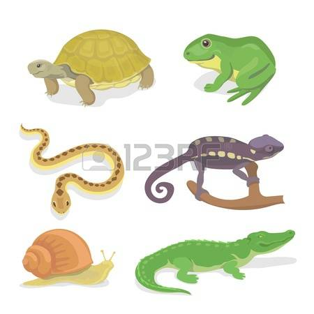 50,667 Reptiles Stock Vector Illustration And Royalty Free.