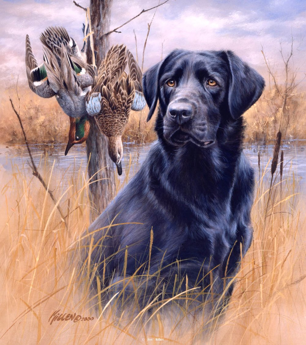 Pix For > Black Lab Duck Hunting Painting.