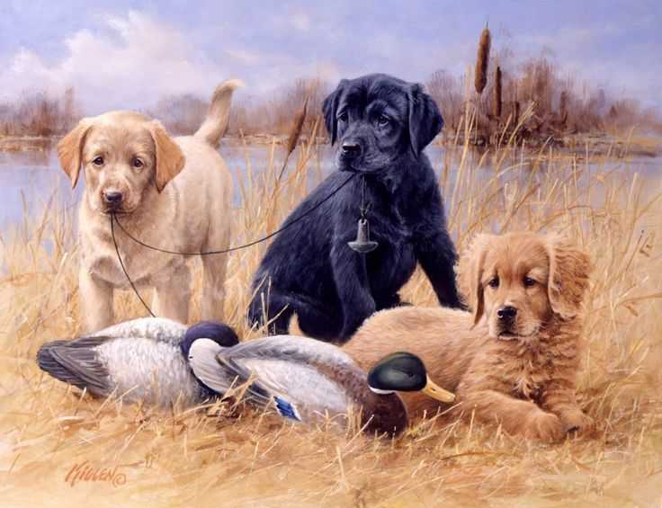 17 Best images about Ducks Unlimited / Labs on Pinterest.