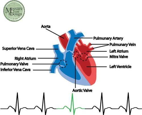 Human Heart Labeled English – Articleblog info