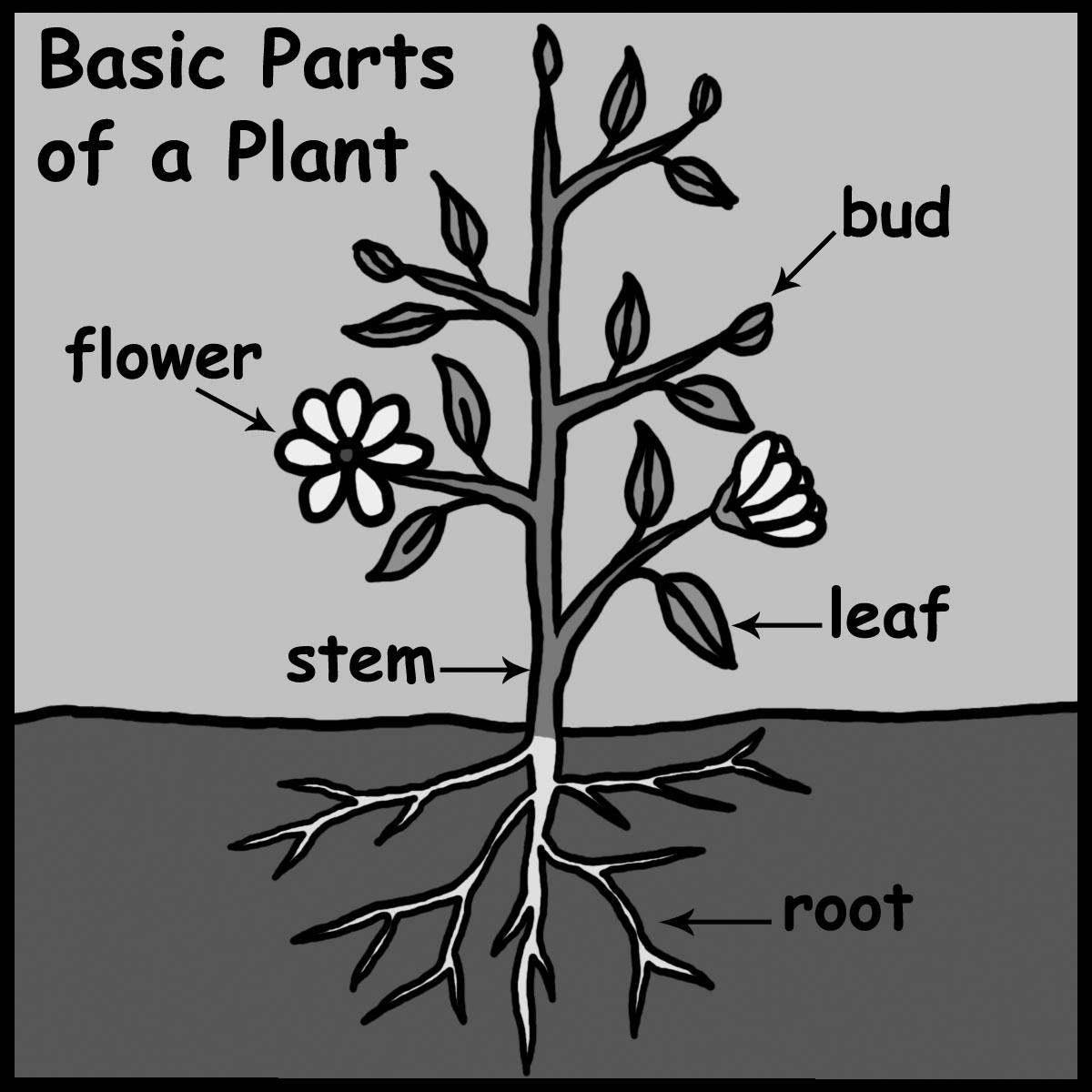 Clip Art: Cells: Plant Labeled Color.