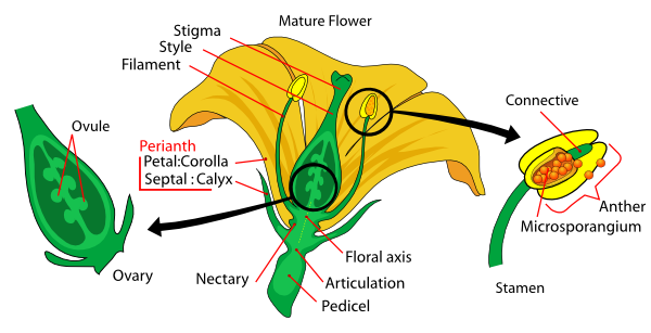 Flower Diagram Labelled.