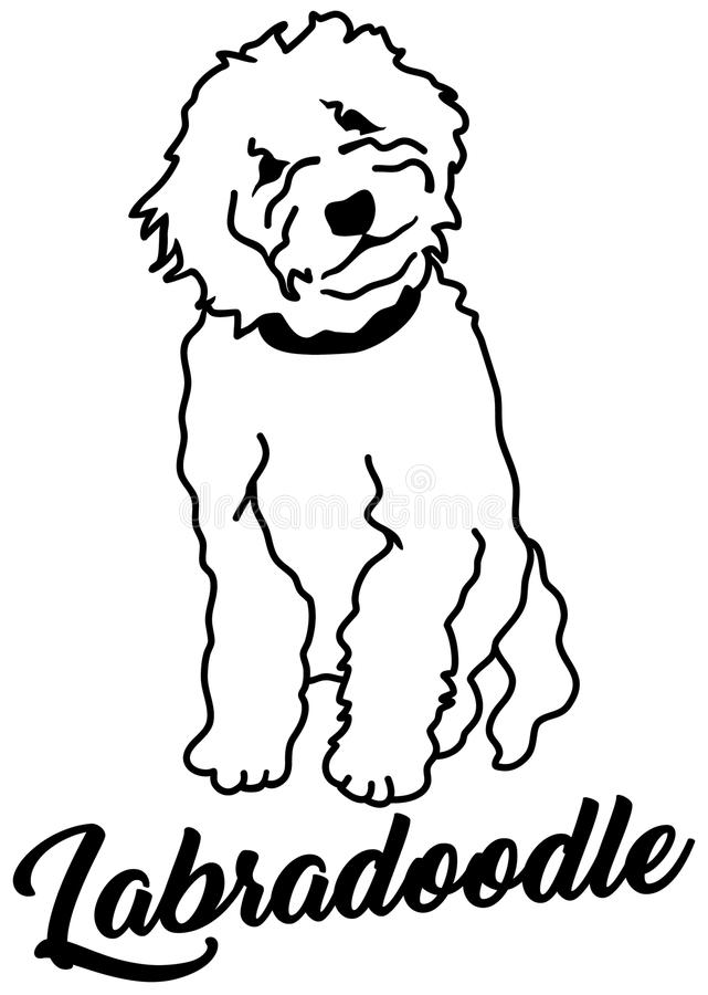 Labradoodle Stock Illustrations.