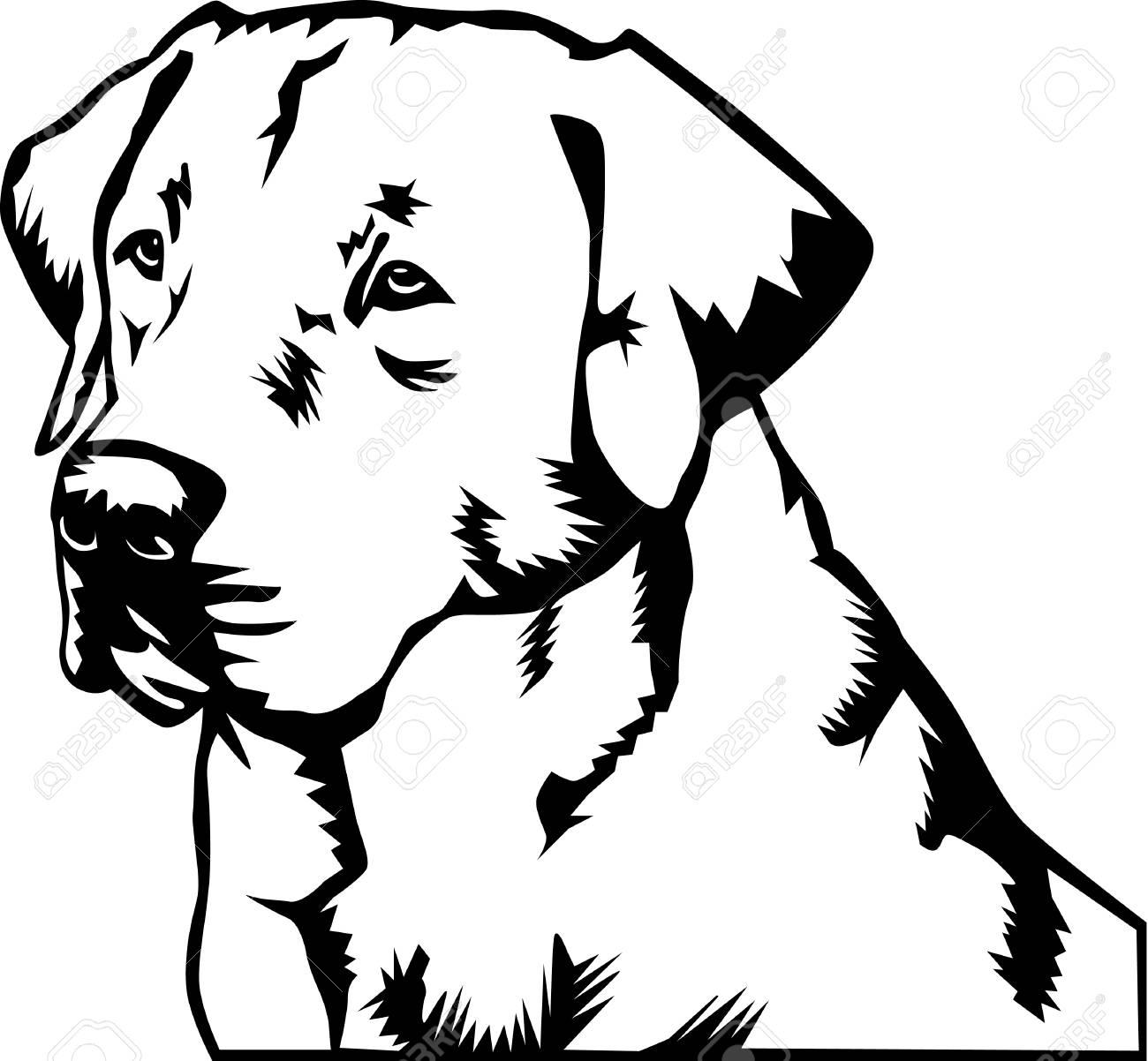 Labrador Retriever Illustration..