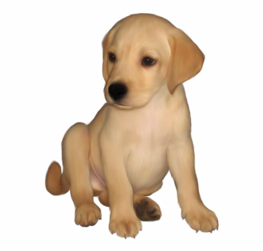 Animals Images, Labrador Retriever, Entourage, Labs.