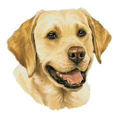 golden retriever dog clipart.