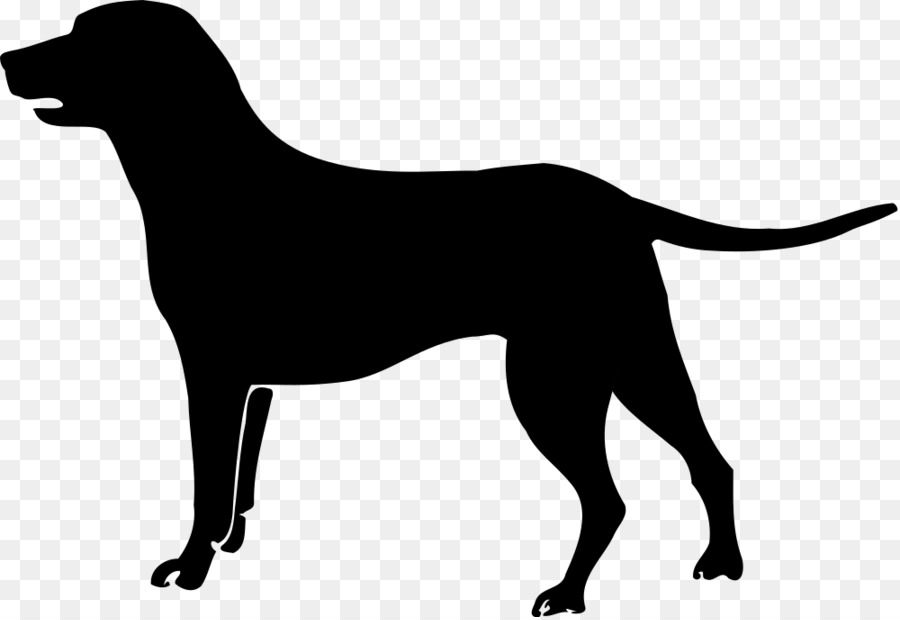 Chesapeake Bay Retriever Labrador Retriever Golden Retriever Clip.