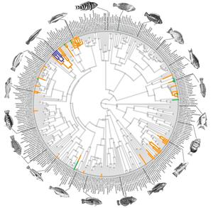 Phylogenetics and Evolutionary Patterns of Cleaning — Vikram B Baliga.