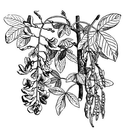 Flower Chain Clip Art, Vector Images & Illustrations.