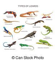 Lacerta Vector Clipart Illustrations. 14 Lacerta clip art vector.
