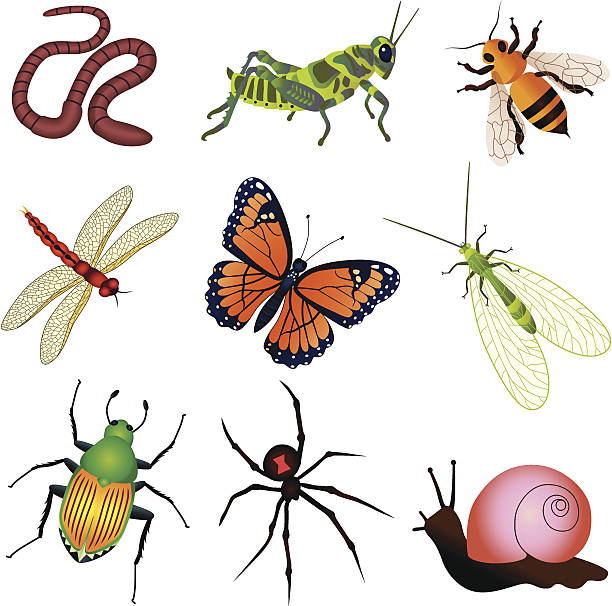 Green Lacewing Clip Art, Vector Images & Illustrations.