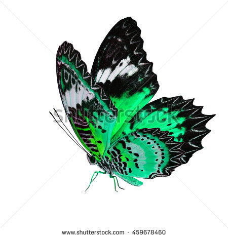Green Lacewing Stock Photos, Royalty.