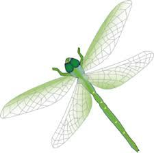 1000+ images about Bday wishes and Dragonflies on Pinterest.