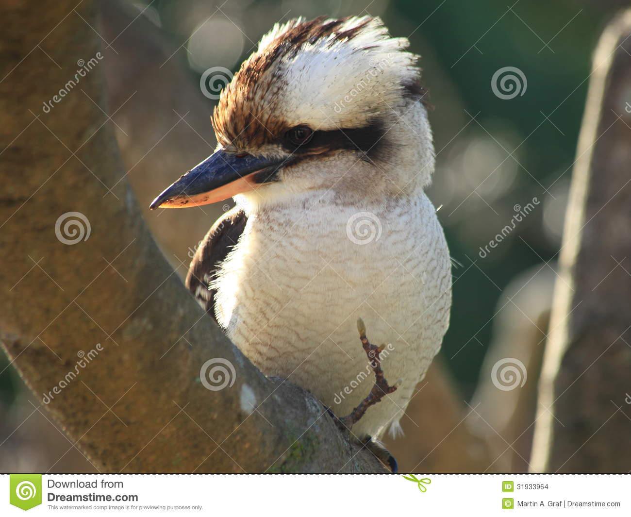 Kookaburra Close.