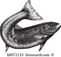 Salmon Clip Art EPS Images. 6,617 salmon clipart vector.