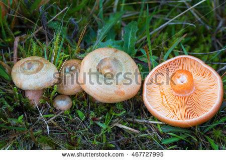 "mushroom Hat"" Stock Photos, Royalty."
