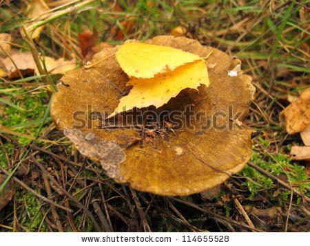 Ugly Mushroom Stock Photos, Royalty.