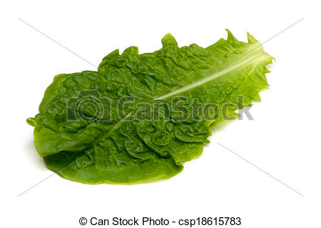 Pictures of Korean Lettuce.