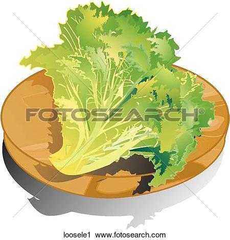 Lactuca sativa Illustrations and Stock Art. 10 lactuca sativa.