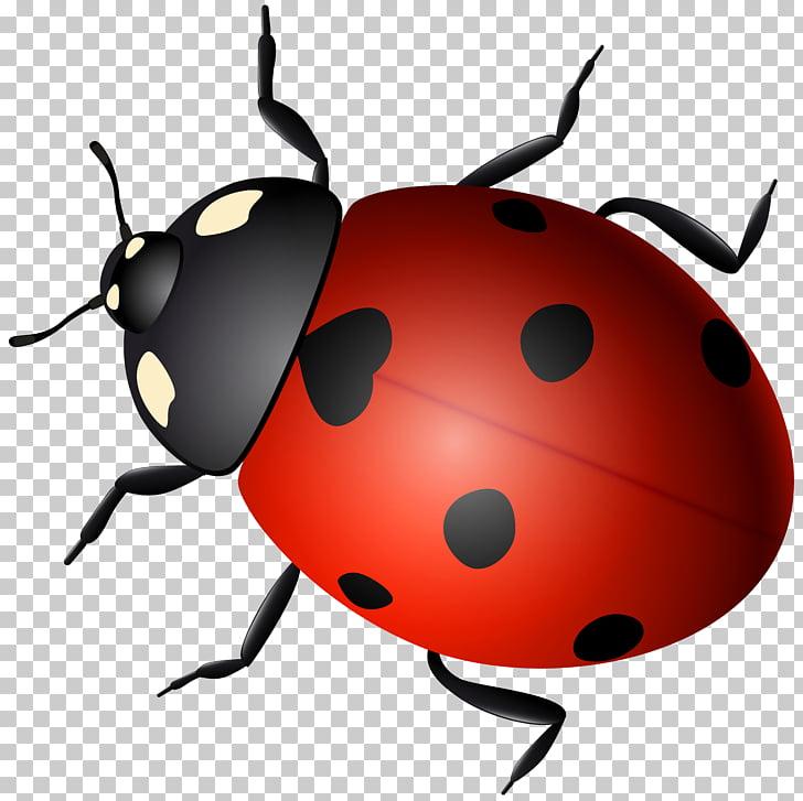 Ladybird Beetle , beetle PNG clipart.