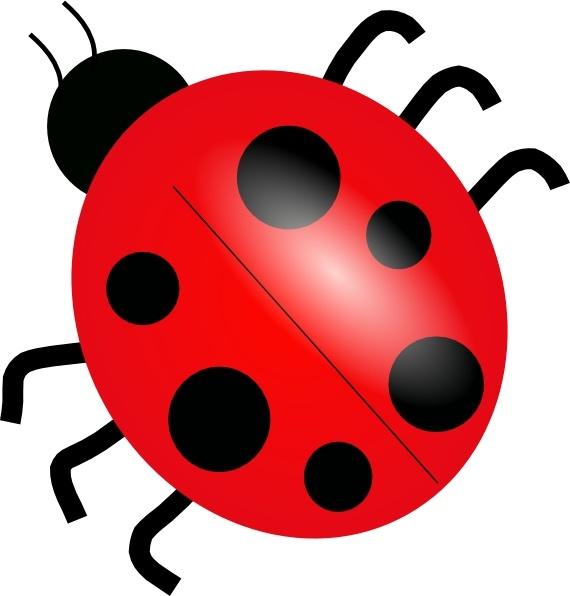Ladybird vector free vector download (19 Free vector) for.