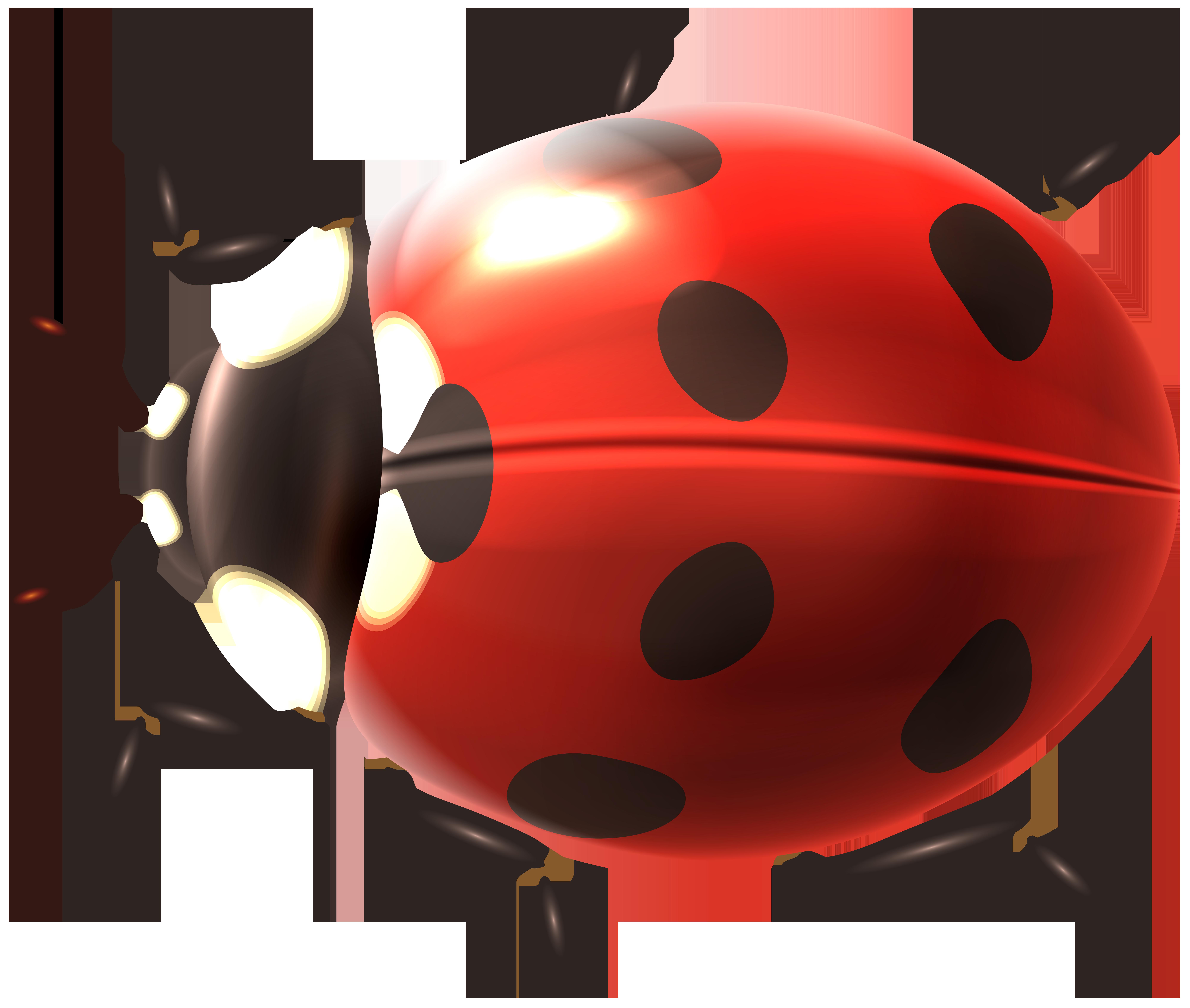 Ladybug Transparent PNG Clip Art Image.