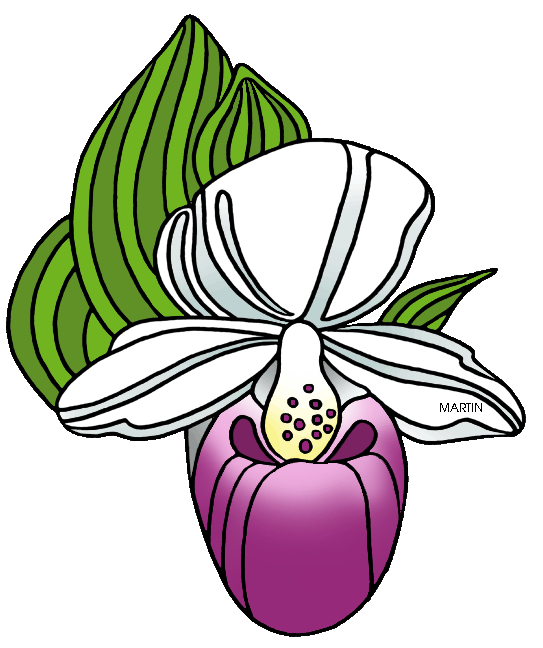 Free United States Clip Art by Phillip Martin, State Wildflower of.