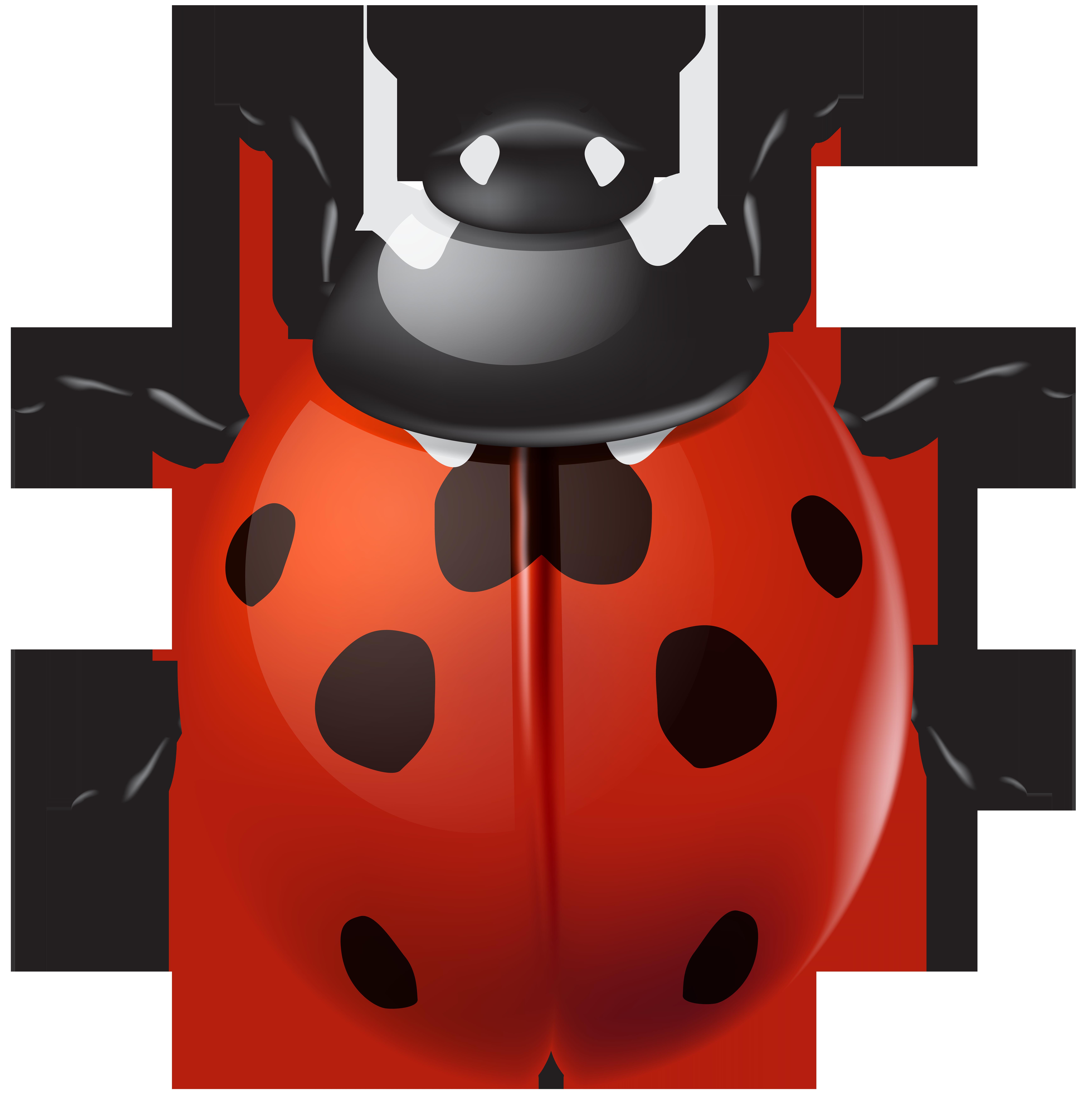 Ladybird PNG Clip Art.