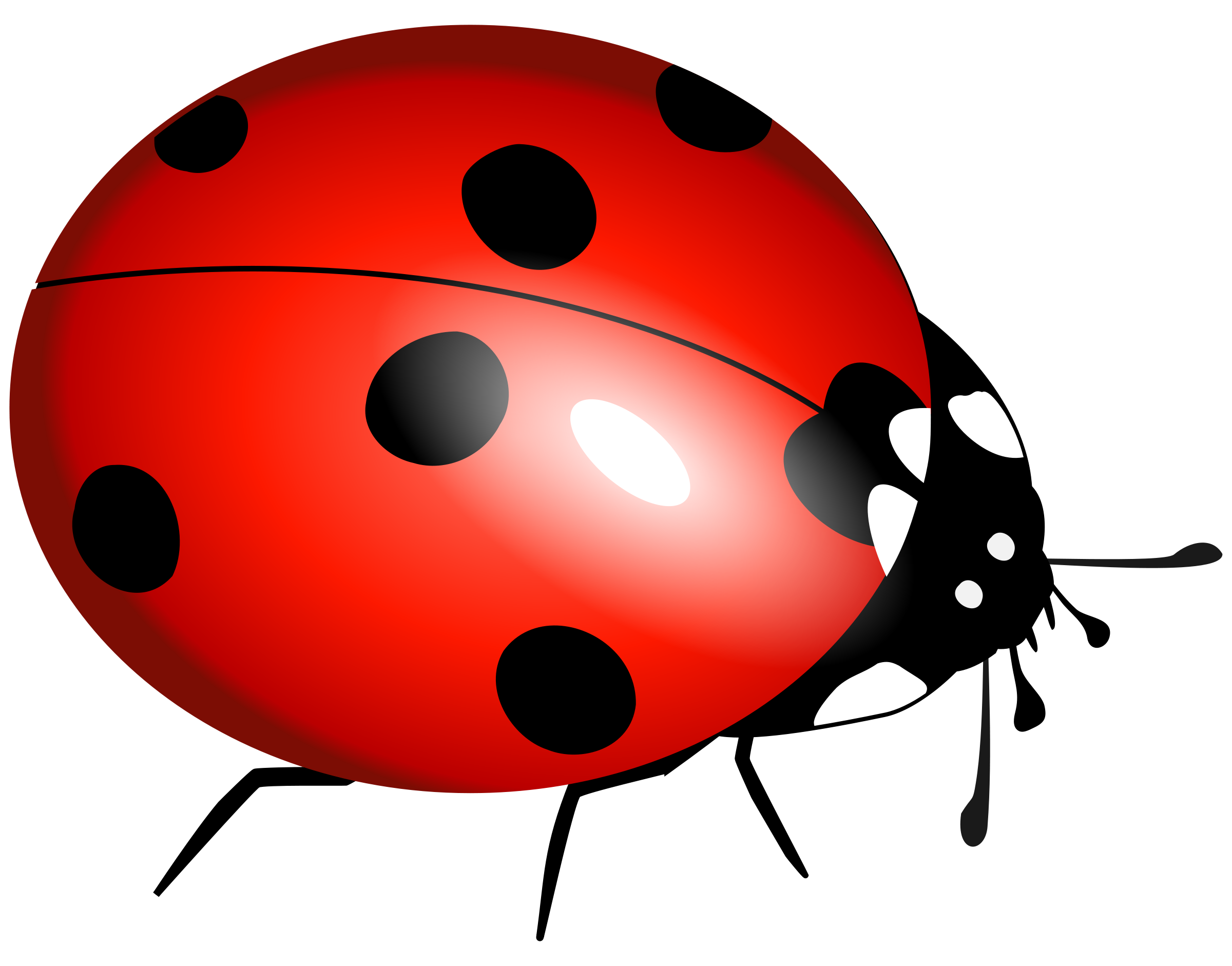 Free Ladybug Clipart at GetDrawings.com.