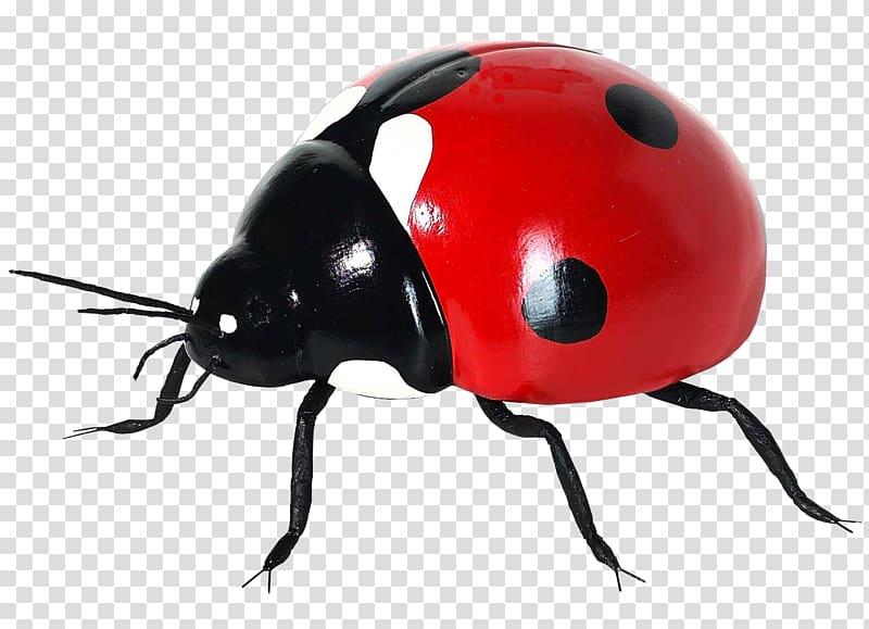 Coccinella septempunctata Insect Icon, Ladybug transparent.