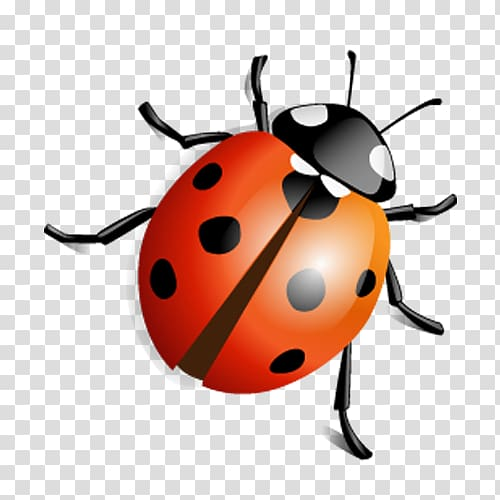 Insect Icon, ladybug transparent background PNG clipart.